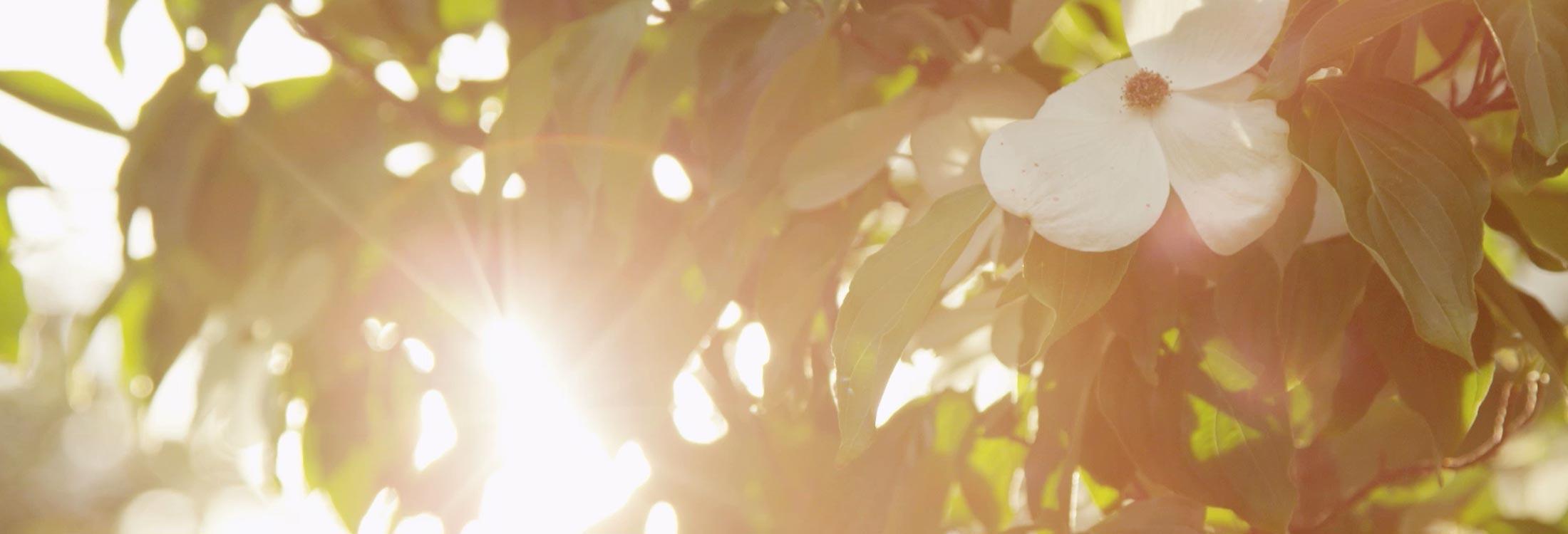 Radien-Dermatology-bg-Sunshine - Radien Dermatology
